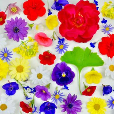 春的珍藏 · 万物声精选白噪音专辑