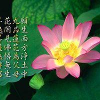 佛教歌曲法音长住